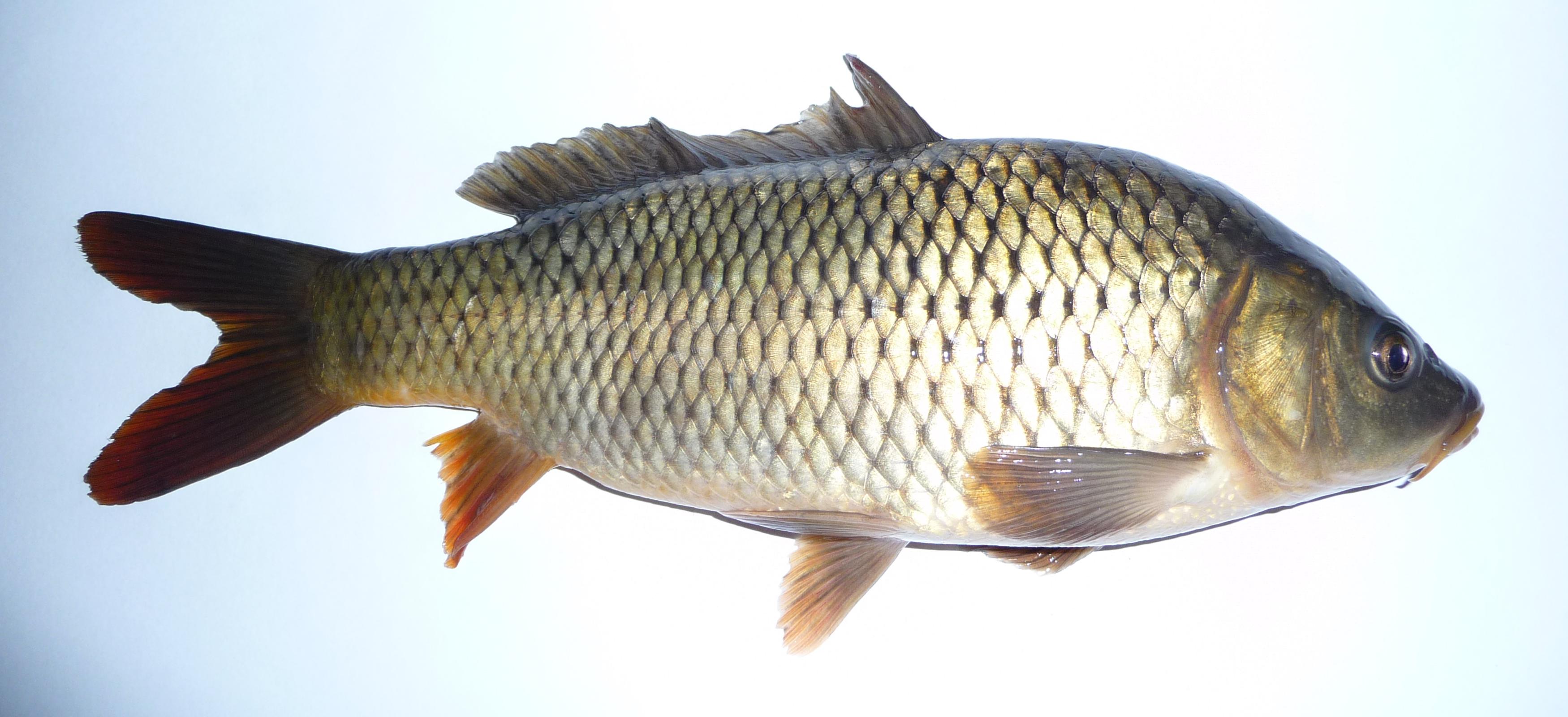 Покашеварим рыбные котлеты рецепт с фото самоотдачу любовь